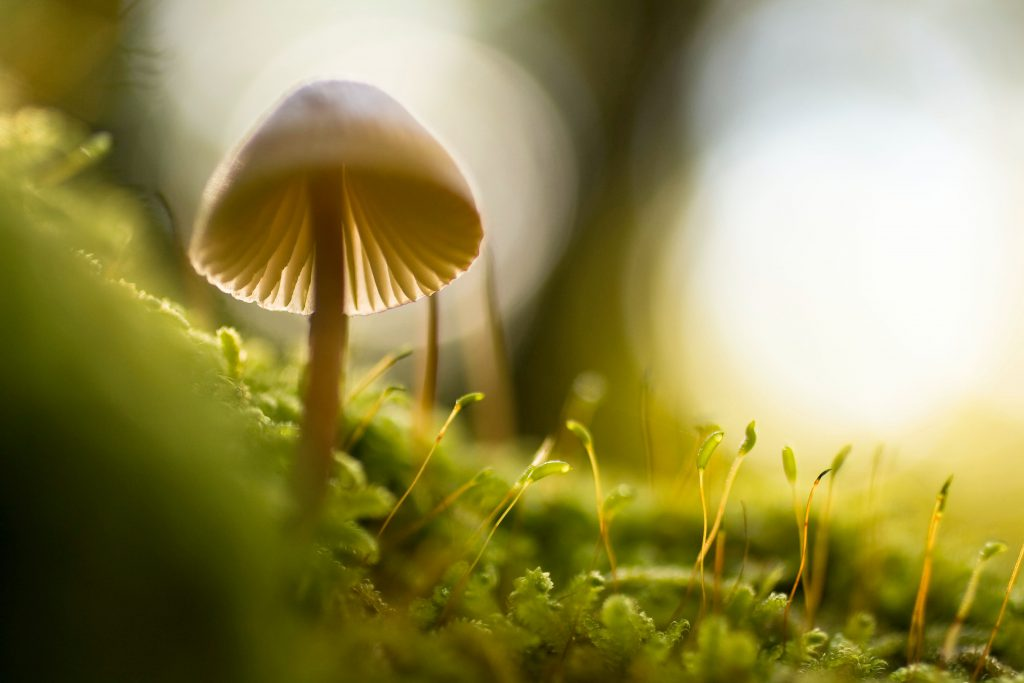 macro photography tips for beginners (12)