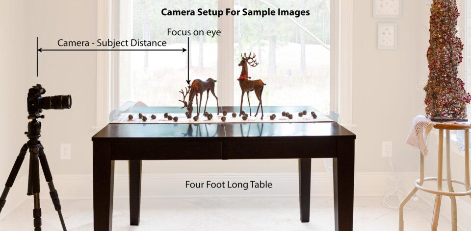 depth of field photography-2